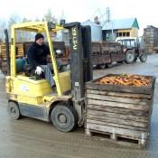 Ketvirti metai kooperatyve dirbantis Arvydas Kiupelis iškrauna šviežiai nukastas morkas.
