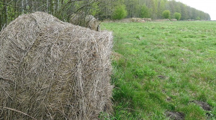 Patvirtinus naują išmokų tvarką bešeimininkių žolės ritinių pamiškės aptiksime vis dažniau.