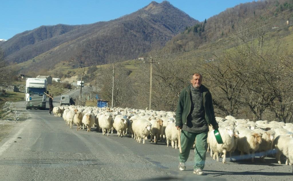 Gruzijos keliuose sutikti avių, karvių ar net kiaulių bandą – kasdienybė.