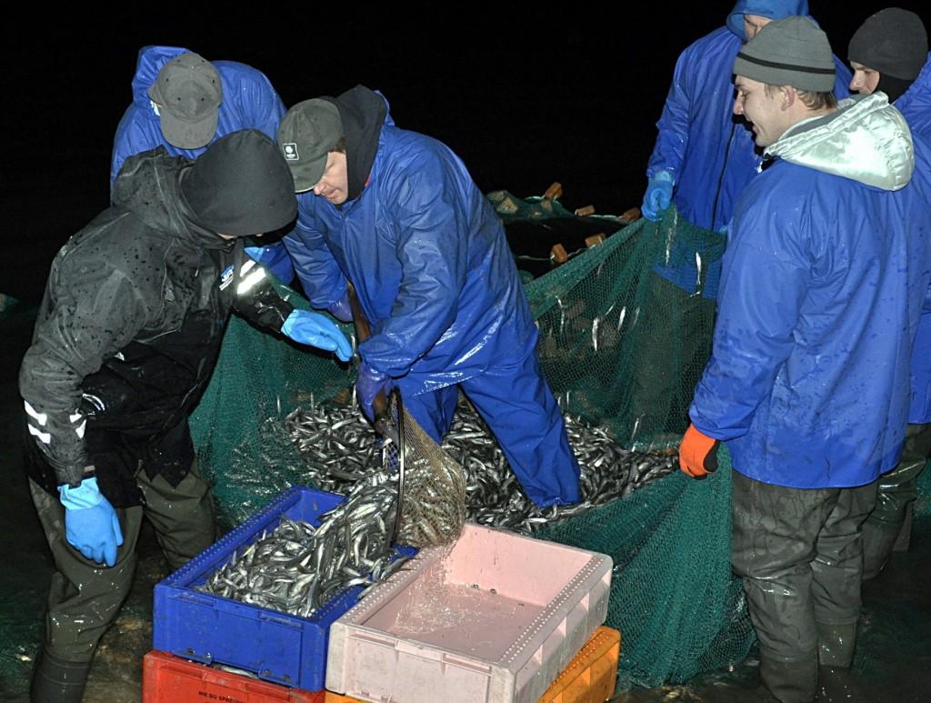 Ir kai sekasi, per naktį šiemet žvejai tepagauna po kelis šimtus kilogramų stintų – tuo tarpu pernai pagaudavo po 10 tonų.