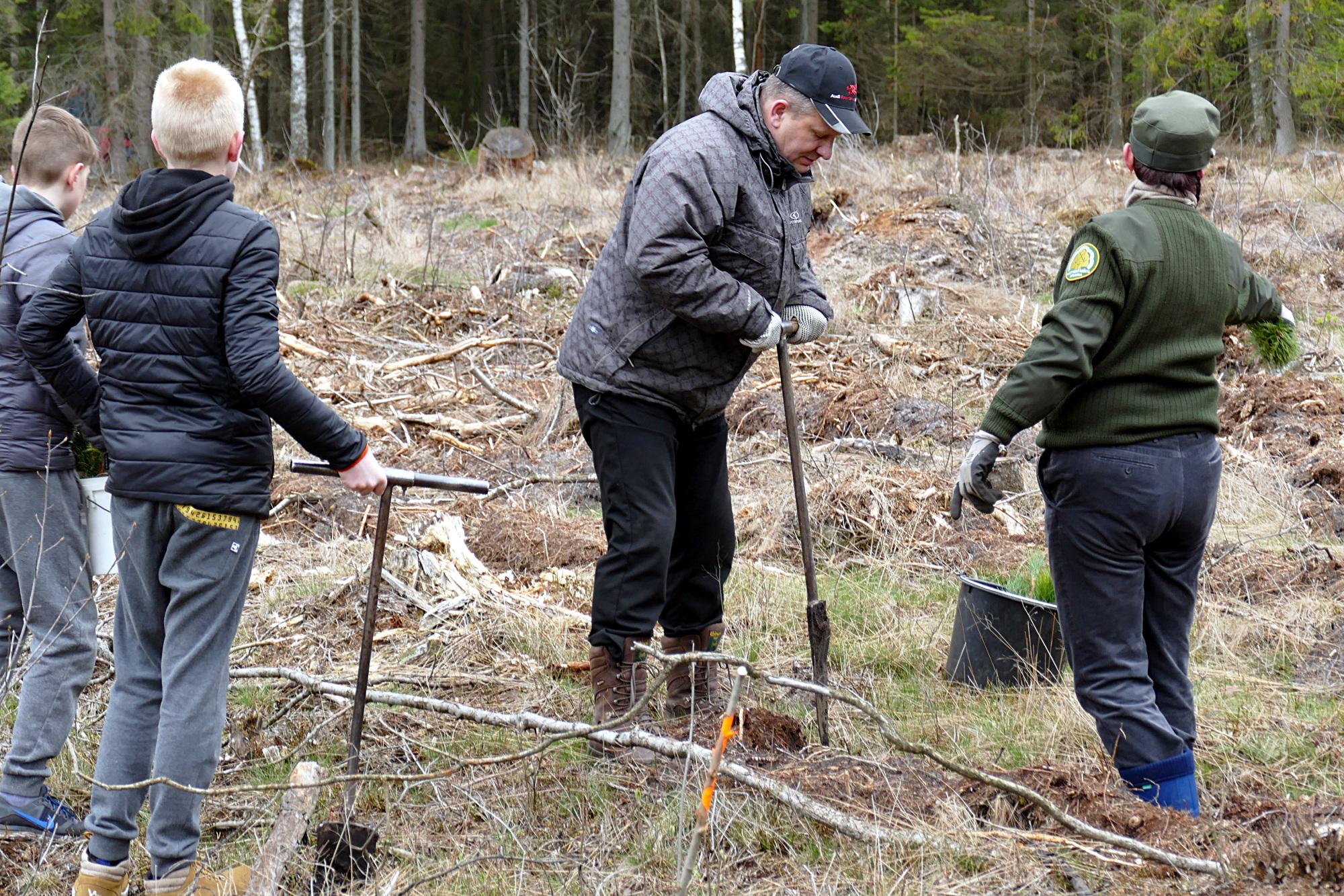 Kartu su šilutiškiais mišką sodino Seimo pirmininko pavaduotojas Kęstas Komskis.