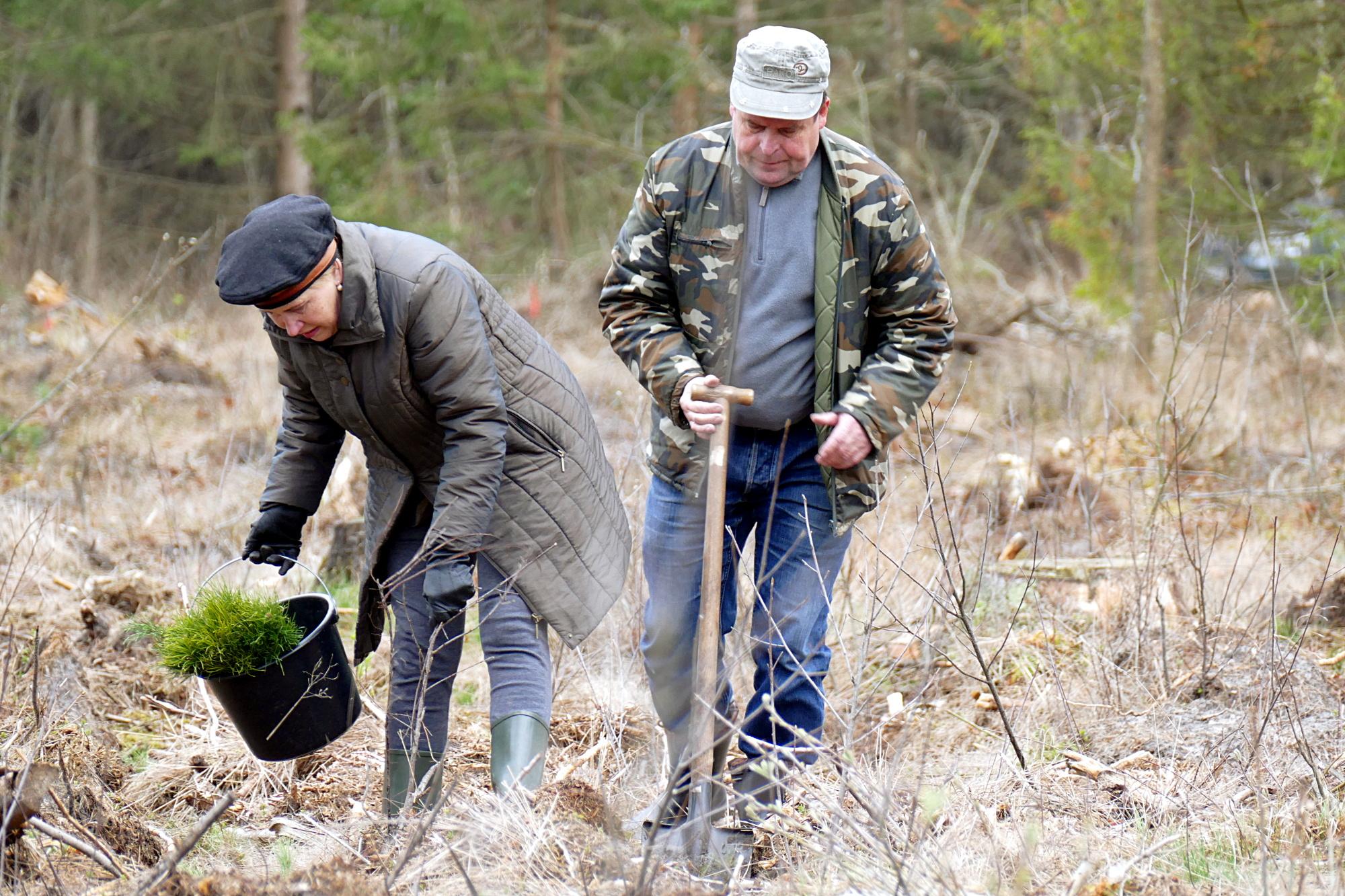 Vita ir Klemensas Stulgos šiame miške grybauja jau apie 30 metų.