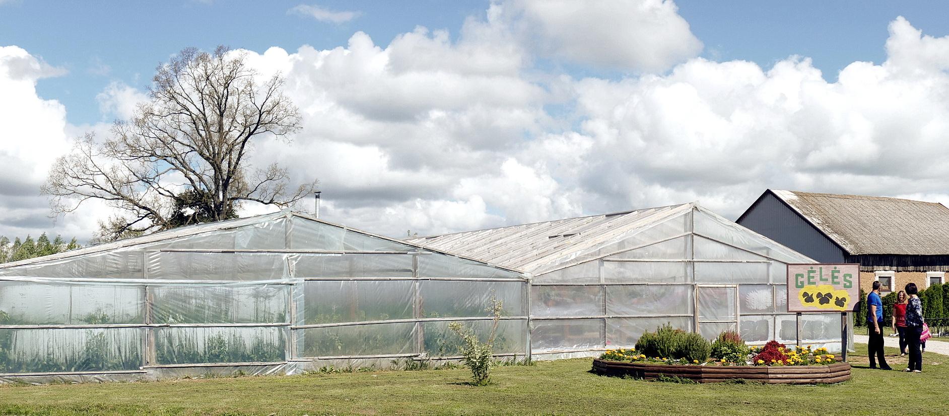Arūno ir Linos Šedžių šiltnamiai Žalpiuose užima apie 16 arų.