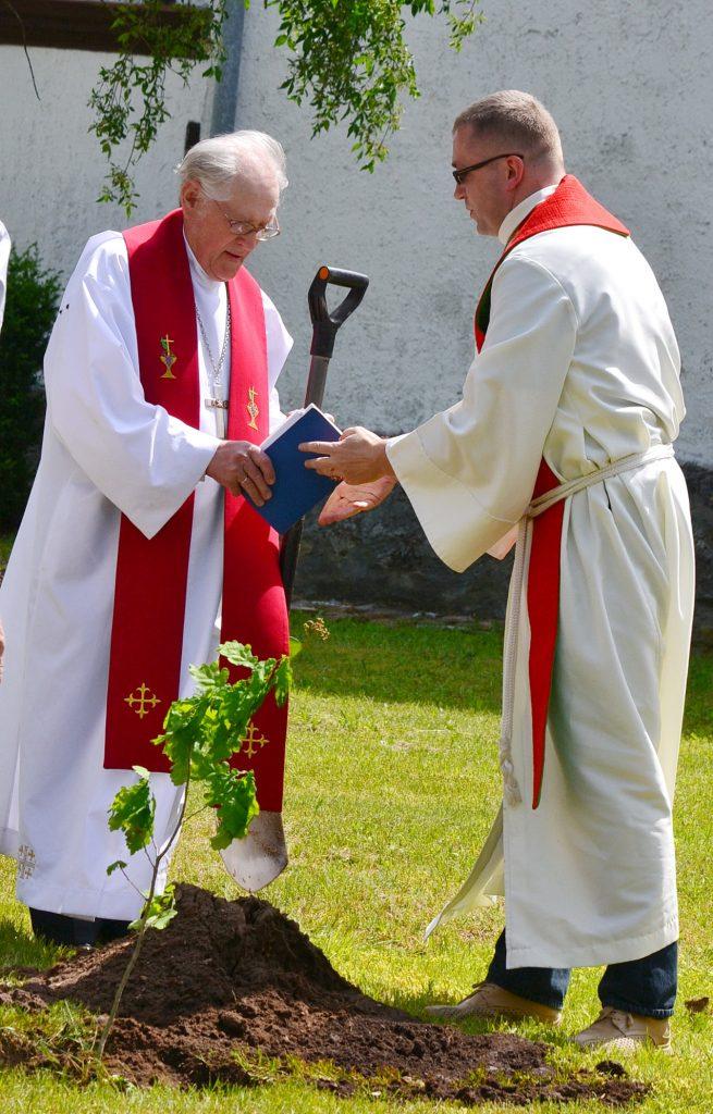 Giesmių šventės garbei pasodintas ąžuoliukas.