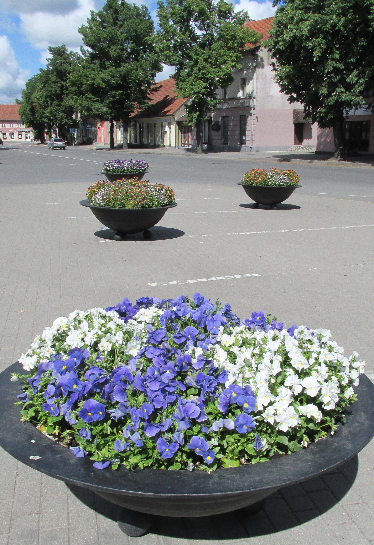 gėlės.2.45.gyv