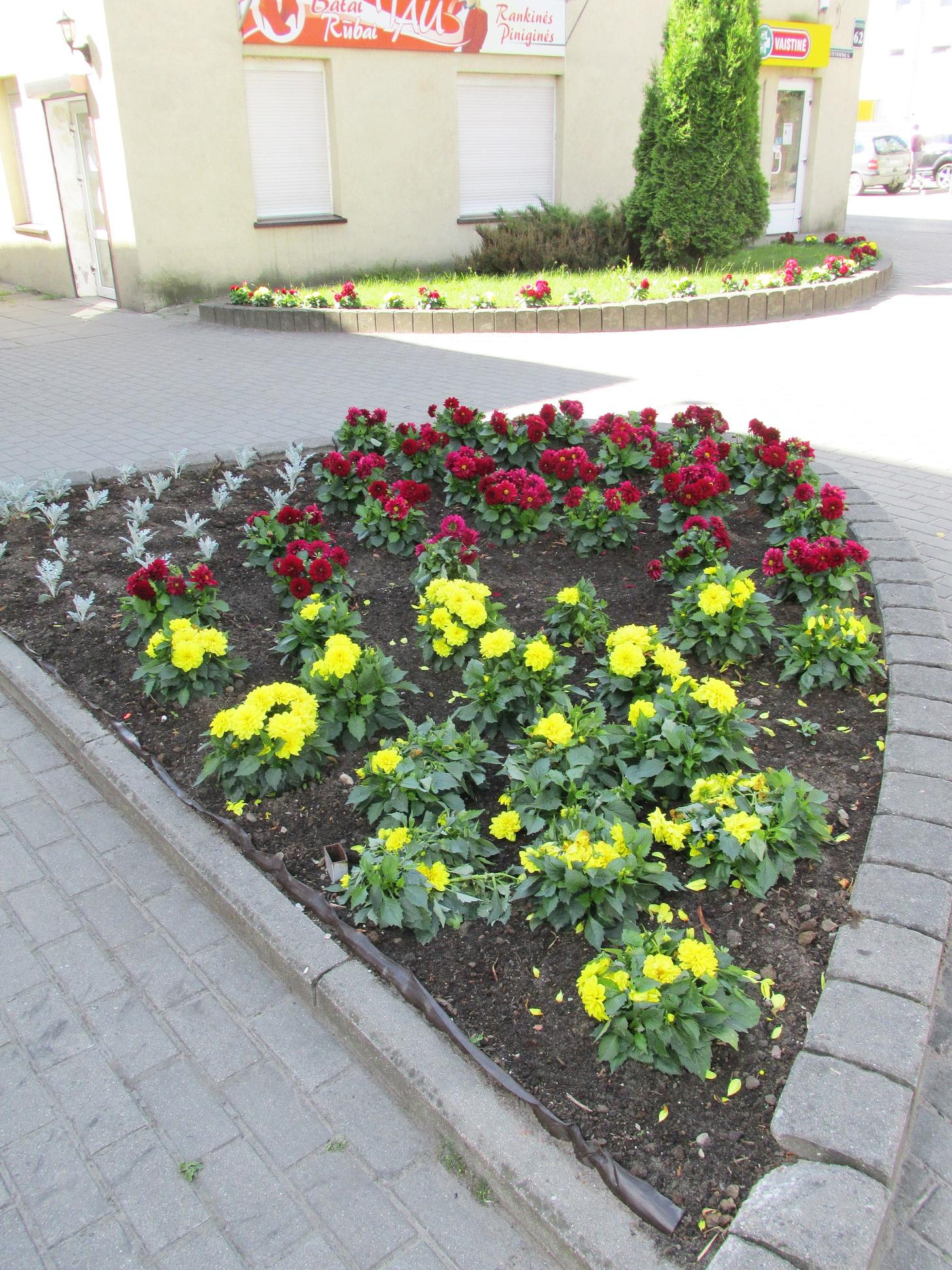 gėlės.3.45.gyv