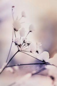 Pasipuošti baltai – galbūt vienintelį kartą gyvenime. Suvokiant, kad kitaip jau niekada nebegalėsi. Jei žiema panorės, tas kartas truks ilgiau nei akimirką, ilgiau nei vieną dieną, ilgiau nei dar vieną rytojų. Jei tik panorės... Niekuomet nežinai, bet rizikuoji. Gyvenimu. Šventė ateina, kai baltai pasipuoši širdį. Kai tiki ir lauki.