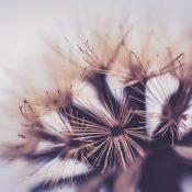 Būti lengvam savo žinojimu, jog esi vienas iš milijardų tokių pat arba panašių. Suvokti, jog tavo gyvenimas priklauso nuo menkiausio vėjo gūsio ir kartu turėti titanišką tikėjimą, jog gali pakeisti pasaulį.