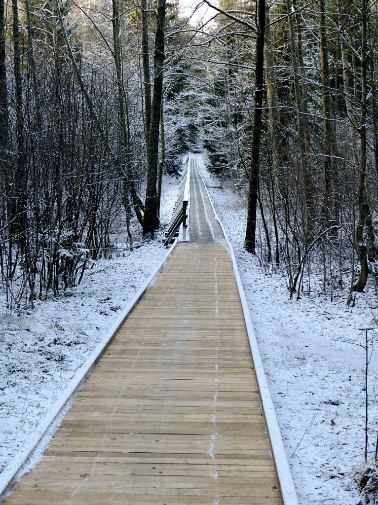Naujojo medinio tako ilgis – 150 m, plotis – 1,5 metro. Tako kraštai apkalti mediniais borteliais, kurie saugo, kad nenuslystų neįgaliųjų vežimėliai.